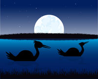 Night landscape with water and bird Stock Photos