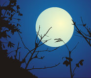 Night landscape wiht moon Royalty Free Stock Photo
