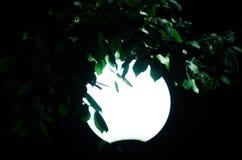 Night lantern on the street Royalty Free Stock Image