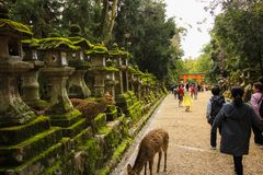 Night lanterns with deer watching the people walk through the Tourii royalty free stock photos