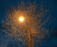 Night light Royalty Free Stock Photo