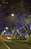 Night Light. Interesting lighting looking up the trees in the streets at night. Long exposure used. No modifications whatsoever stock photo