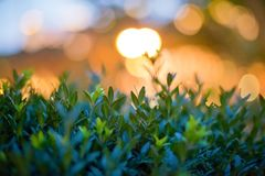 Night light bokeh royalty free stock images