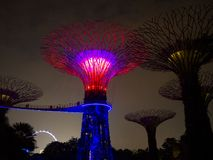 Night light in Gardens by the Bay, Singapore SEP 2017.  stock photo