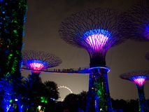 Night light in Gardens by the Bay, Singapore SEP 2017.  royalty free stock images