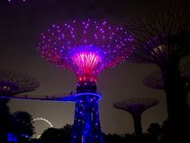 Night light in Gardens by the Bay, Singapore SEP 2017.  stock photography