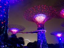Night light in Gardens by the Bay, Singapore SEP 2017.  royalty free stock image