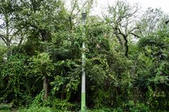 Night light pole surrounded by beautiful green leaves and large trees, side view of a rural road royalty free stock image