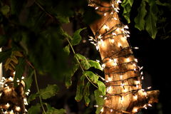 Night lights. Light garland on the tree. Thailand, Bangkok, Khaosan Road Royalty Free Stock Image