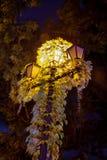 Night lights old Uzhgorod Royalty Free Stock Images