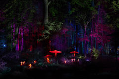 Night lights show `Inspiration` in Ostankino garden city park. Hundreds of lights in the forest. Amazing 3d light and laser illumi Royalty Free Stock Photos