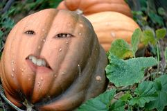 Night of the living dead. Photomontage with a red pumpkin Stock Photography