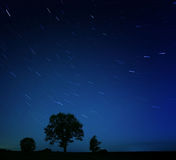 Night lonely tree falling stars Royalty Free Stock Image
