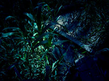 Night long grass Stock Photo