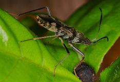 Night macro shot of a bug on a leaf. A bug gathering food at night Stock Image