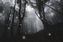 Night in magic enchanted fairy tale forest. Magic lights in mysterious enchanted fairy tale forest with fog at night royalty free stock photo