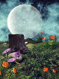 Night meadow with flowers Stock Image
