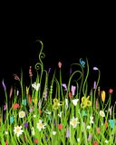 Night meadow for your design Royalty Free Stock Photography