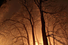 Night in a misty forest Royalty Free Stock Photo