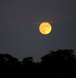 Night Moon. Full moon on a grey night stock photo
