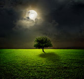 Night and the moon. On a green field Stock Photos