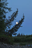 Night, the moon and trees. Royalty Free Stock Images