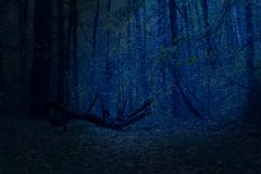 Night mysterious and fantastic forest moonlight highlights a fallen tree stock image