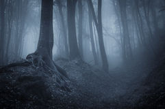Night in a mysterious forest stock photo