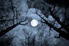 Night mysterious landscape in cold tones. Silhouettes of the bare tree branches against the full moon and dramatic cloudy night sky Stock Photo