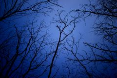 Night mysterious landscape in cold tones - silhouettes of the bare tree branches against dramatic cloudy sky royalty free stock photo