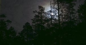 Night mysterious panoramic landscape in cold tones - silhouettes of the spruce forest under the full moon and dramatic stock video footage