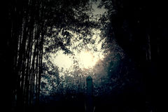 Night nature and ghost illustration Stock Image