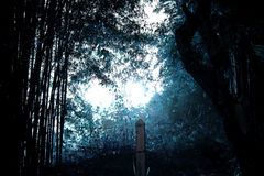 Night nature and ghost illustration Stock Photos