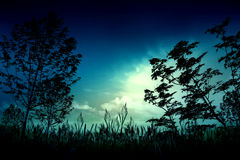 Night nature and ghost illustration Royalty Free Stock Photo
