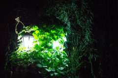 Night nature light the green lantern. Light in the night shining through the green leaves of the plant royalty free stock photography