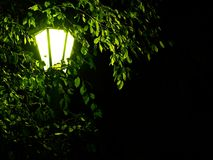 Night old-fashioned light. In the park through the leaves and branches Stock Images