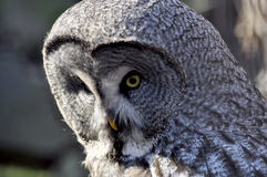Night owl Stock Images