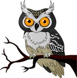 Night Owl royalty free illustration