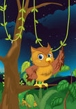 Night owl Stock Photography