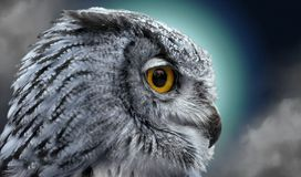 Night owl. Close portrait of an owl in the night Royalty Free Stock Photos