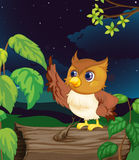 Night owl Royalty Free Stock Photography