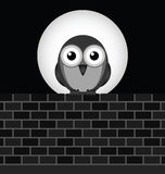 Night Owl Royalty Free Stock Photo