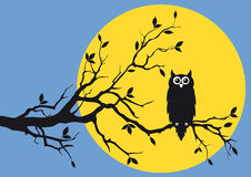 Night owl with moon. Night owl on tree branch,  background Royalty Free Stock Photos