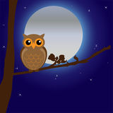Night Owl by Moonlight Stock Photography