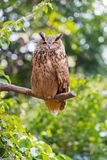 Night owl. A night owl stands on the tree Royalty Free Stock Images
