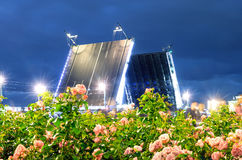 Night palace bridge in the foreground Blooming roses and bright lights St. Petersburg Stock Photos