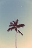 Night palm. Palm tree in Hawaii at night Royalty Free Stock Photography