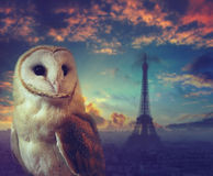 Night in Paris, France. Barn owl portrait with silhouette of Eiffel tower. On a background. Shallow DOF (soft focus Stock Image