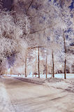 Night park alley in winter frosty weather lit by lights. The winter alley - winter picturesque city landscape with snowy alley and frosty trees royalty free stock images