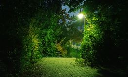 Night Park Dangerous Background Royalty Free Stock Photography